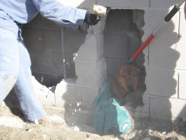 It took animal control officers and Coachella Valley Water District employees about 30 to 40 minutes to save the weak, dehydrated dog.