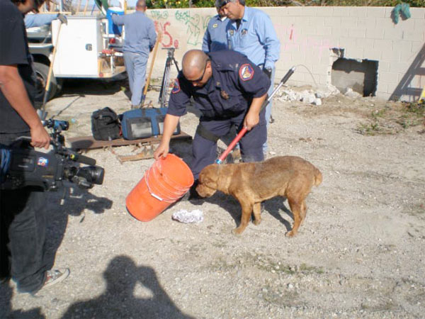 A Riverside County Animal Services officer transported Wally to the Valley Animal Medical Center for hydration treatment.  The dog was then taken to the Coachella Valley Animal Campus in Thousand Palms to be reunited with his presumed owner or to be adopted to a new home. <span class=meta>(Sgt. Luis Rosa, Riverside County Animal Services)</span>