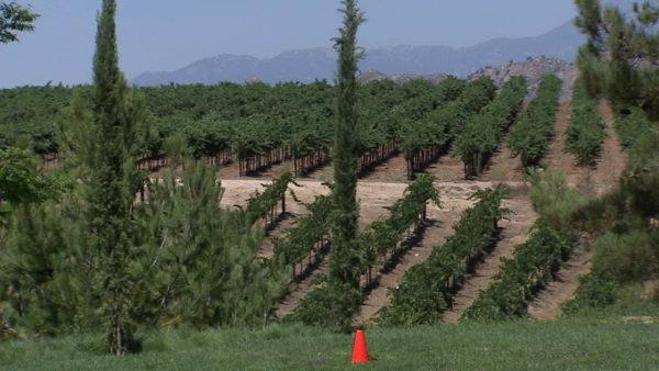 Temecula has gained a reputation as one of SoCal's wine regions, but there's more to offer than tasty grape juice.