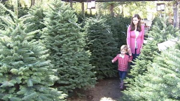 Redlands tree farm boasts perfect Xmas trees