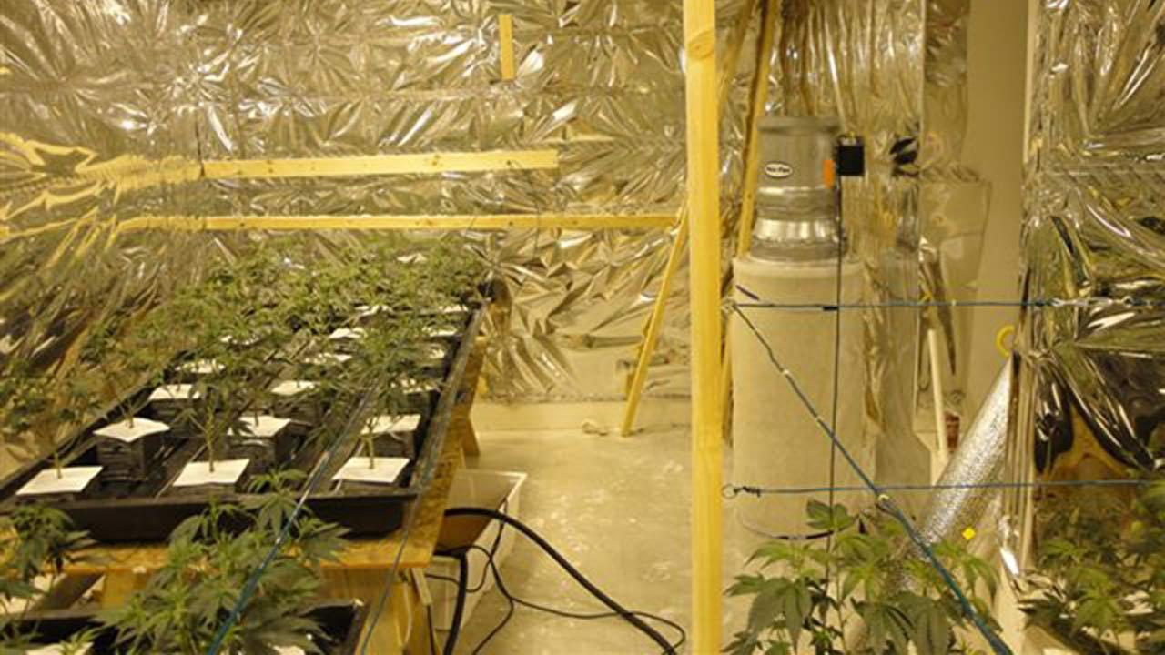 Authorities served a search warrant at a house on Kassel Road in Eastvale and found a marijuana-cultivation operation containing 1,464 marijuana plants on Thursday, March 21, 2013.