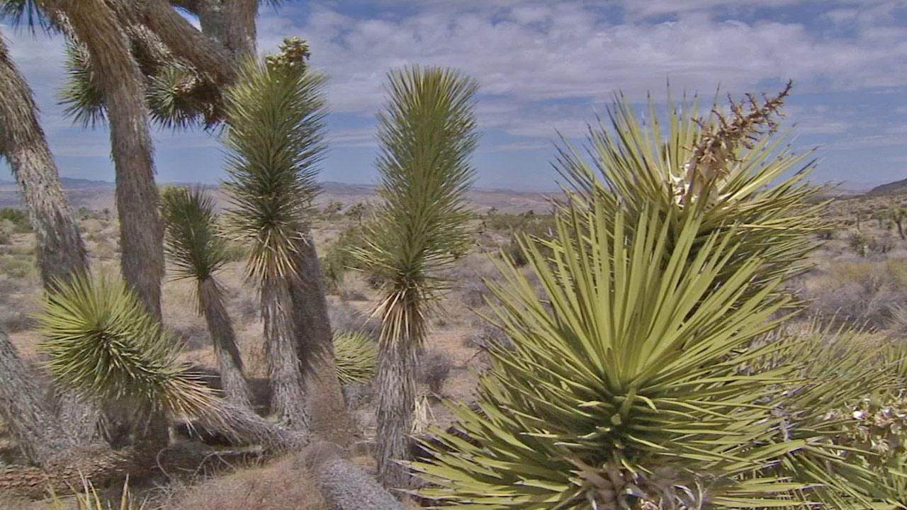 A section of Joshua Tree National Park is shown in this undated file photo.
