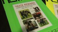A flyer shows the pictures of bulldogs stolen from a San Bernardino familys backyard on Wednesday, May 22, 2013.