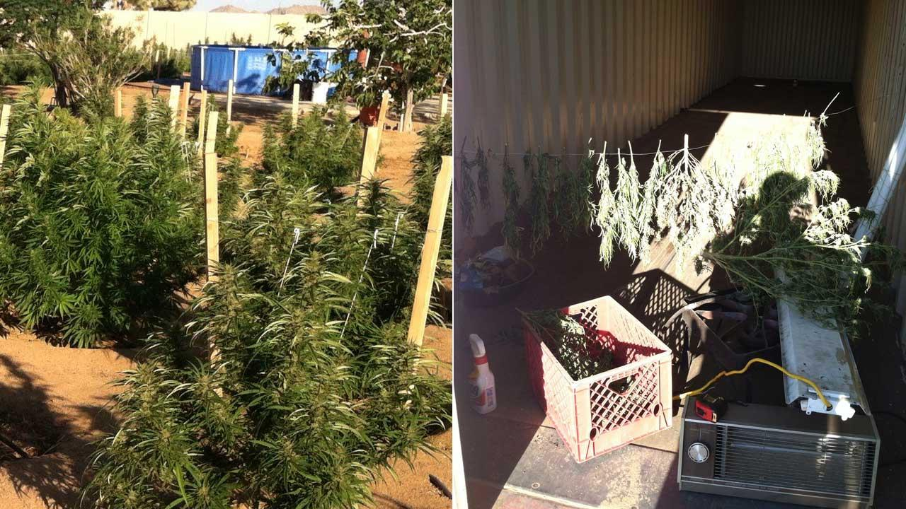 San Bernardino County Sheriffs personnel served a search warrant at 3055 Sage Avenue at 5 p.m. Wednesday, Sept. 11, 2013,  and seized an illegal marijuana growing operation.