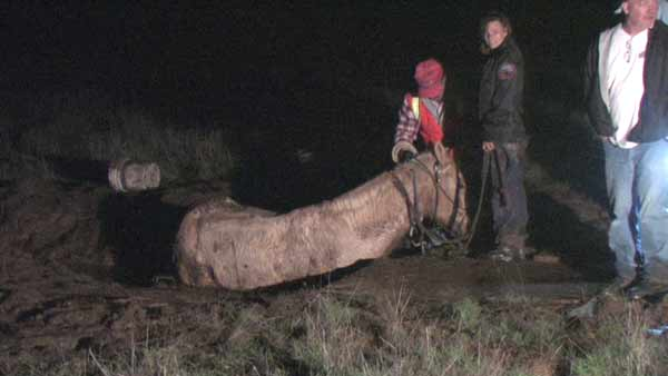 Mack, the horse, was mired in mud near Lake Mathews as he and his rider were attempting to cross a field that was flooded by the recent rain storms. <span class=meta>(CasperNews)</span>