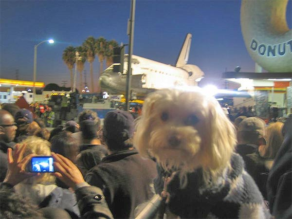 ABC7 viewer Carm Barrien posted this photo on our Facebook page of space shuttle Endeavour on Friday, Oct. 12, 2012.  &#160;Send us your shuttle pictures and video to video@abc7.com or post them to the ABC7 Facebook page. You can also Tweet us @abc7 with #SpotTheShuttle. <span class=meta>(ABC7 viewer Carm Barrien)</span>
