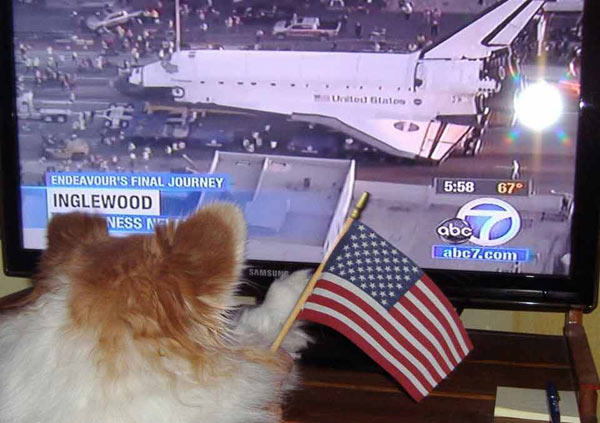 ABC7 viewer Kay Bartholomae posted this photo on our Facebook page of a dog watching Eyewitness News&#39; coverage of space shuttle Endeavour on Friday, Oct. 12, 2012. &#160;Send us your shuttle pictures and video to video@abc7.com or post them to the ABC7 Facebook page. You can also Tweet us @abc7 with #SpotTheShuttle. <span class=meta>(ABC7 viewer Kay Bartholomae)</span>
