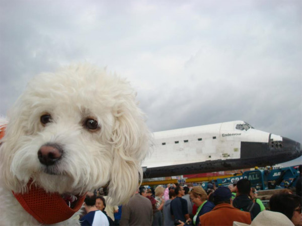 "<div class=""meta image-caption""><div class=""origin-logo origin-image ""><span></span></div><span class=""caption-text"">ABC7 viewer Brian Christie posted this photo on our Facebook page of his dog Chelsea posing with space shuttle Endeavour on Friday, Oct. 12, 2012.    Send us your shuttle pictures and video to video@abc7.com or post them to the ABC7 Facebook page. You can also Tweet us @abc7 with #SpotTheShuttle. (ABC7 viewer Brian Christie)</span></div>"