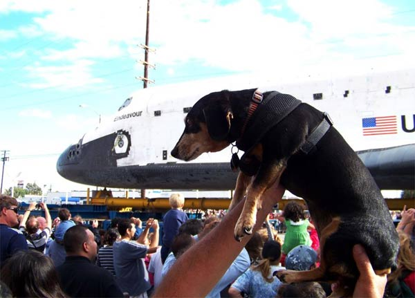 "<div class=""meta image-caption""><div class=""origin-logo origin-image ""><span></span></div><span class=""caption-text"">ABC7 viewer Trey Salazar posted this photo on our Facebook page of his dog Dee Dee and space shuttle Endeavour on Friday, Oct. 12, 2012.  Send us your shuttle pictures and video to video@abc7.com or post them to the ABC7 Facebook page. You can also Tweet us @abc7 with #SpotTheShuttle. (ABC7 viewer Trey Salazar)</span></div>"