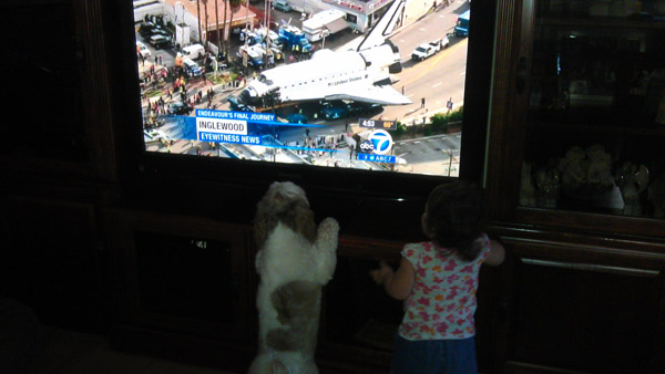 "<div class=""meta ""><span class=""caption-text "">On Sunday, Oct. 14, 2012, ABC7 viewer Tammie Hirth sent in this photo of her 19-month-old granddaughter and her puppy Bentley watching Eyewitness News' coverage of space shuttle Endeavour.  Send us your shuttle pictures and video to video@abc7.com or post them to the ABC7 Facebook page. You can also Tweet us @abc7 with #SpotTheShuttle. (ABC7 viewer Tammie Hirth)</span></div>"