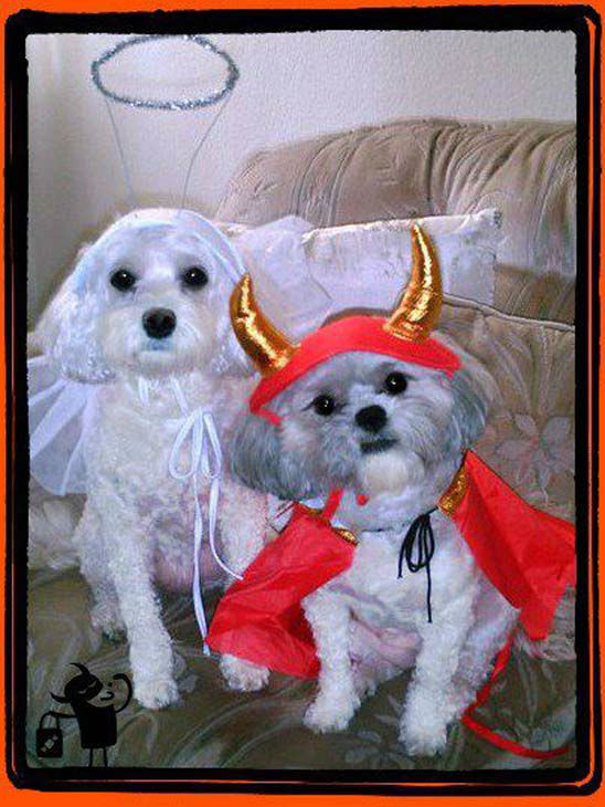 ABC7 viewer Lisa Luthern sent us this photo of her dogs Roxie and Tilley.&#160;Post your Halloween pictures on our ABC7 Facebook page. <span class=meta>(KABC Photo&#47; ABC7 viewer Lisa Luthern)</span>