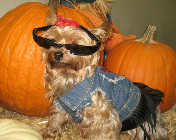 ABC7 viewer Paula Goldwater sent us this photo of her dog Sophie. She&#39;s quite the biker babe.&#160;Post your Halloween pictures on our ABC7 Facebook page. <span class=meta>(KABC Photo&#47; ABC7 viewer Paula Goldwater)</span>