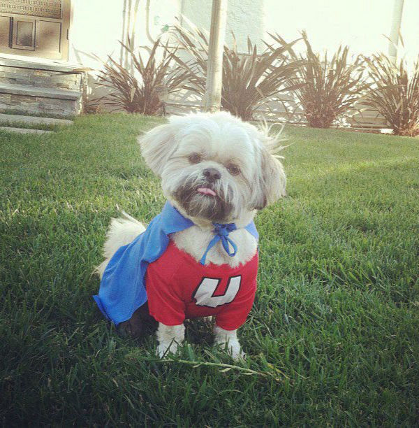Man&#39;s best friend can be heroic. ABC7 viewer Kerri Piper sent us this photo of her dog Eliot up to par in this superhero suit.&#160;Post your Halloween pictures on our ABC7 Facebook page. <span class=meta>(KABC Photo&#47; ABC7 viewer Kerri Pipper)</span>