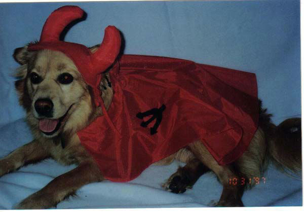 ABC7 viewer Gary Rohde shared this photo of his devil dog Wuffy, who wishes all of you a Happy Halloween!&#160;Post your Halloween pictures on our ABC7 Facebook page. <span class=meta>(KABC Photo&#47; ABC7 viewer Gary Rohde)</span>