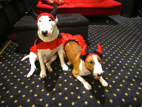 ABC7 viewer Suzi Siener sent us this photo of her little devils, Roscoe and Ripley.&#160;Post your Halloween pictures on our ABC7 Facebook page. <span class=meta>(KABC Photo&#47; ABC7 viewer Suzi Siener)</span>