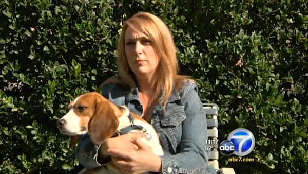 'I jumped at the chance to save them,' Shannon Keith said. 'It is a university, it is in California and these particular beagles were subjected to toxicity tests.'