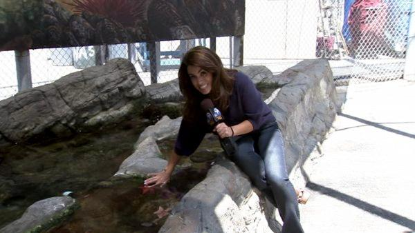 ABC7's Alysha Del Valle says the Cabrillo Marine Aquarium in San Pedro is educational, inexpensive, and most importantly, fun! See photos of her visit to the aquarium.