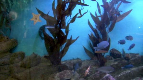 All of the exhibits are family-friendly, including several grand aquariums containing colorful varieties of sea critters, such as monkey fish, garibaldi, lobsters, eels and sea anemones.