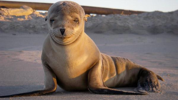 Reward offered for sea lion shot, killed