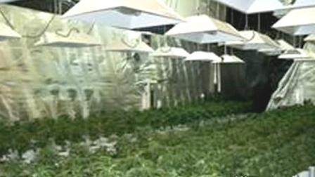 Los Angeles County Sheriffs investigators in Lancaster followed their noses and made a major marijuana bust on Monday, Aug. 22, 2011.