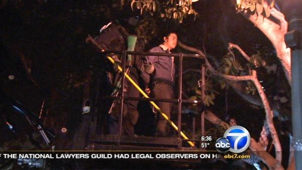 LAPD officers removed an Occupy Los Angeles protester from a tree on Wednesday, Nov. 30, 2011.