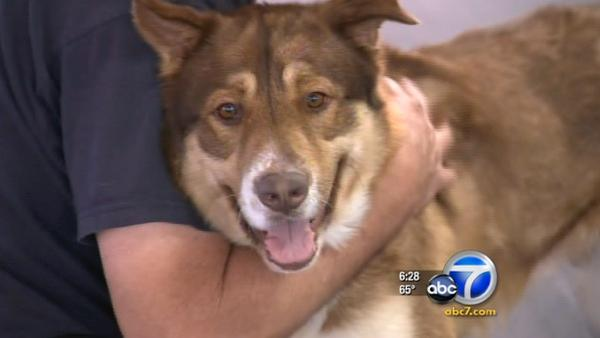 Rescued from waters, dog 'Nemo' needs home