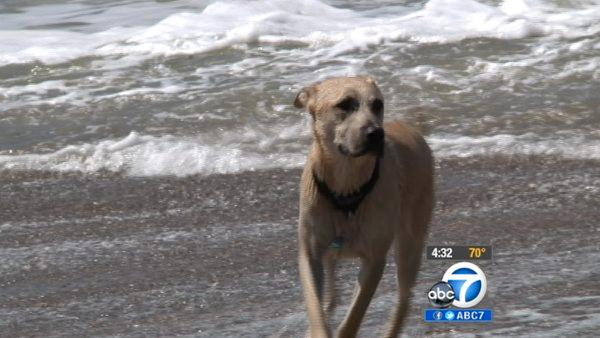 Rancho Palos Verdes dog park may close