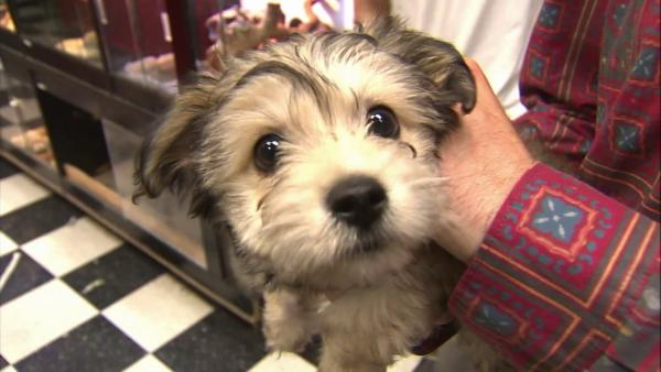 LA close to banning sale of 'puppy mill' dogs