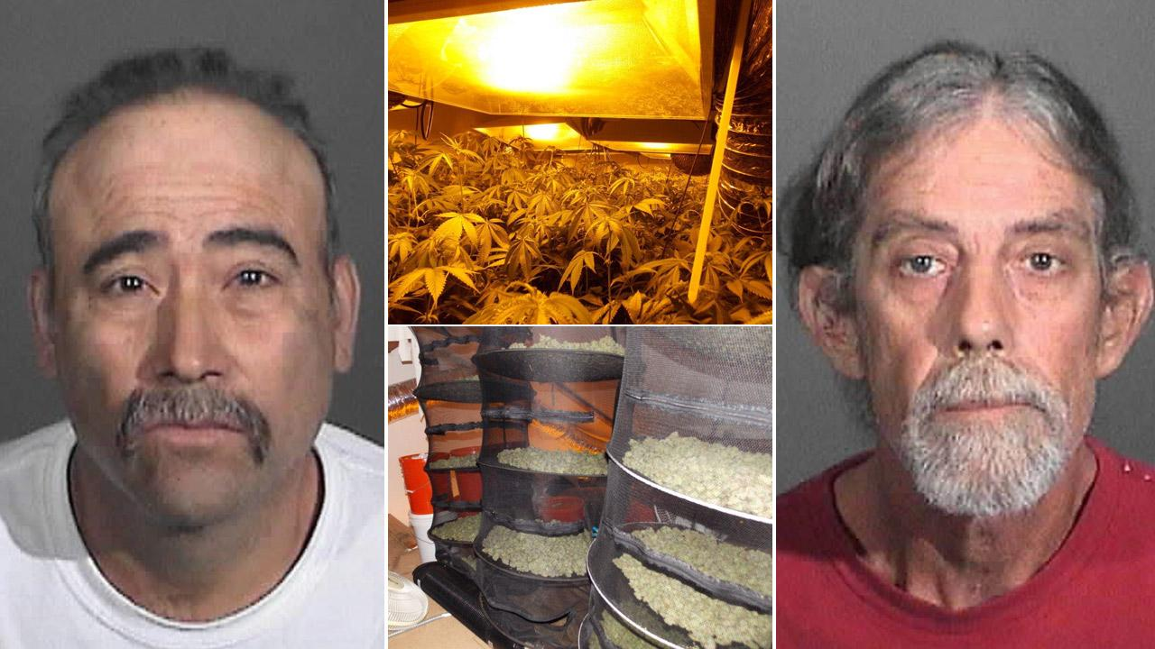 The Los Angeles County Sheriffs Department made two arrests and seived about 1,000 marijuana plants and 40 pounds of processed marijuana product at a home in Hidden Hills on Wednesday, Aug. 29, 2012.