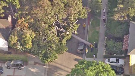 A 30-foot tree is seen on top of a car after it fell over and crashed down in a street in Rancho Park in West Los Angeles on Friday, Sept. 21, 2012.