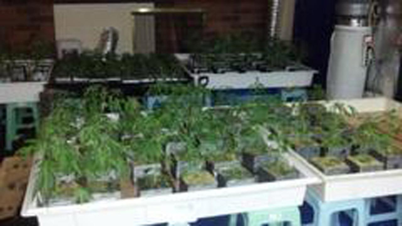 More than 2,000 marijuana plants with an estimated street value of more than $6 million were discovered in three different homes in the San Gabriel Valley on Wednesday, Oct. 3, 2012.