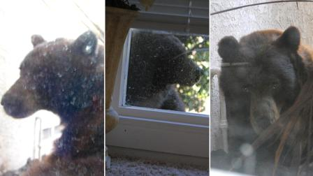 Glendora homeowner Gavin Schofield-Smith sent in these photos of a bear right outside of his home on the 300 block of East Sierra Madre Avenue on Friday, Oct. 19, 2012.