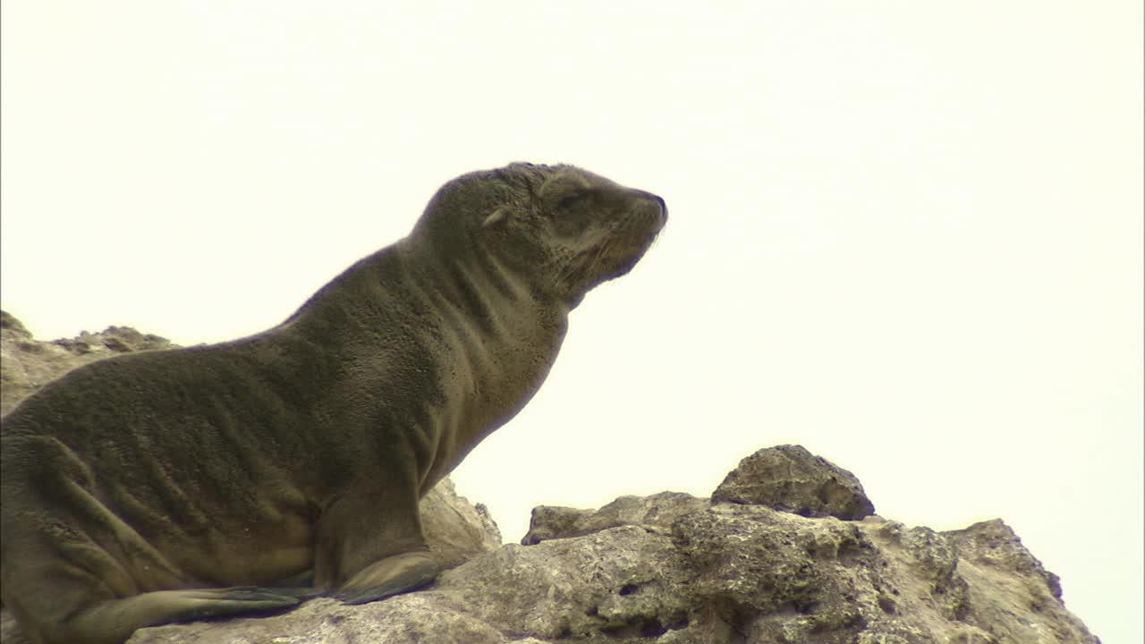 A baby sea lion sits on a rock in Malibu on Tuesday, December 25, 2012.