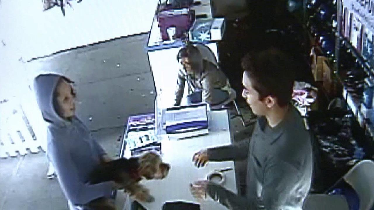Surveillance video shows a woman returning a stolen 4-month-old Yorkshire terrier in Woodland Hills on Sunday, Jan. 27, 2013.