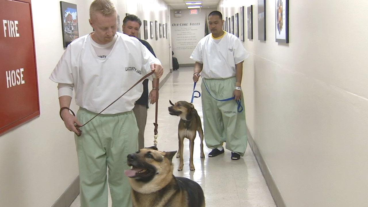 Inmates at Mens Central Jail, like the ones seen in this Monday, April 1, 2013 photo, are being given the opportunity to take part in a program to prepare rescue dogs for adoption.