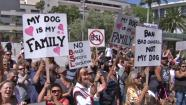 More than 100 pit bull owners rallied on the steps of the Hall of Administration building in downtown L.A. against dog discrimination on Monday, May 20, 2013.