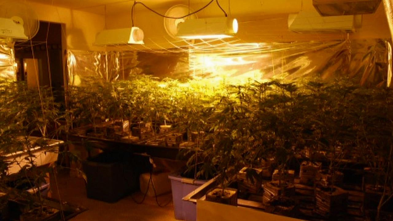 More than 200 marijuana plants were found growing inside a home in Temple City on Tuesday, Oct. 15, 2013.