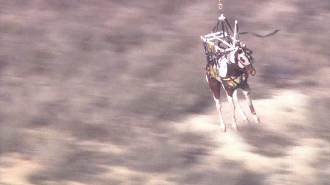 Rescuers airlifted a horse out of the Angeles National Forest after it slipped and fell about 50 feet on Friday, March 14, 2014.