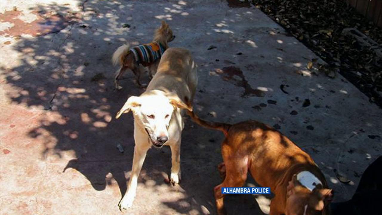 Animal control officers seized 18 animals from a home in Alhambra
