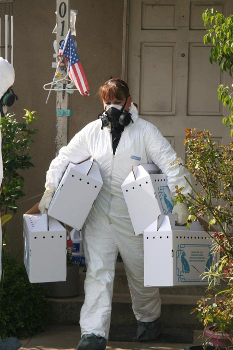 Authorities seized more than 100 cats from a home in Santa Ana. The smell was so foul that animal services had to use hazmat suits and respirators to go inside the home. <span class=meta>(Santa Ana Police Department)</span>