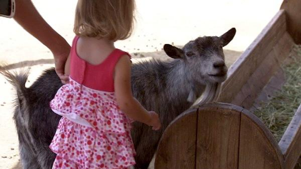 Kids and parents can brave the goat pen, or hop on over to the bunny patch to cuddle with cottontails and guinea pigs.
