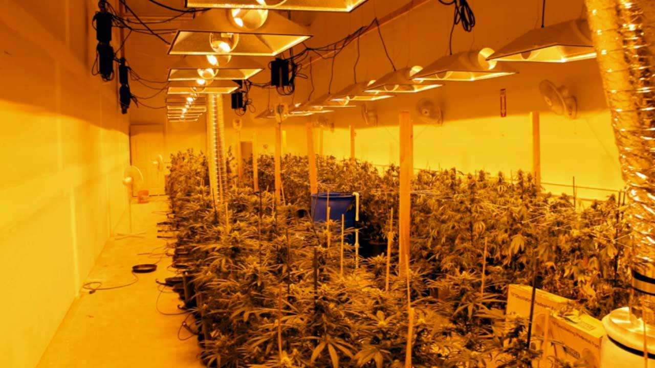Two people were arrested after police discovered a $3.5 million marijuana-growing operation in Oxnard Thursday, June 13, 2013. Detectives found over 1,000 pot plants and 20 pounds of dried marijuana.