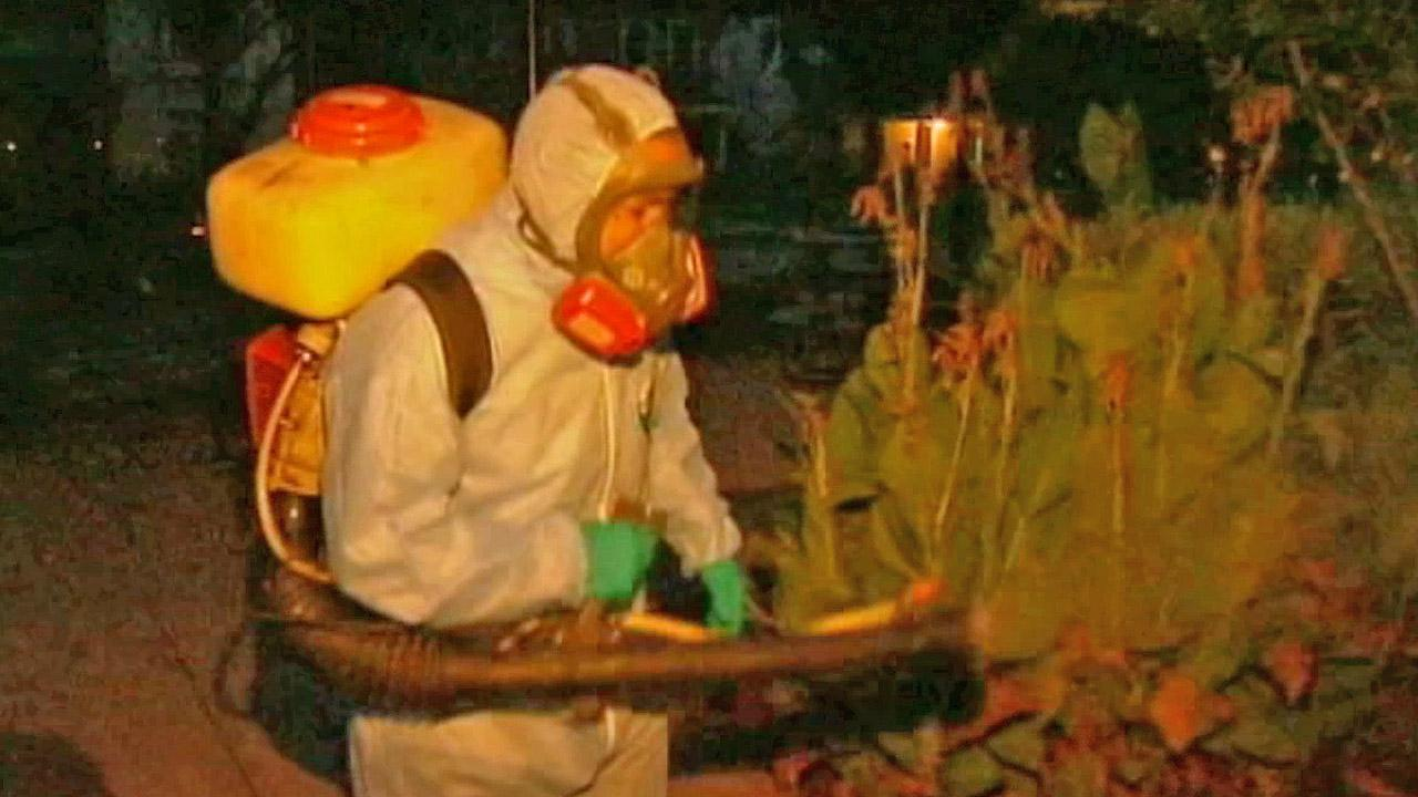 Insecticide is sprayed in Dallas, Texas in this August photo.