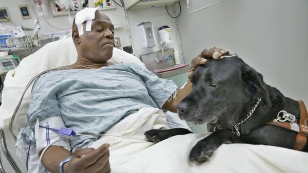 Blind man, dog safe after subway track fall