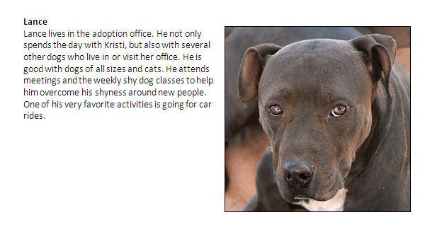Update on Michael Vick's dogs from the Best Friends Animal Society in Utah.