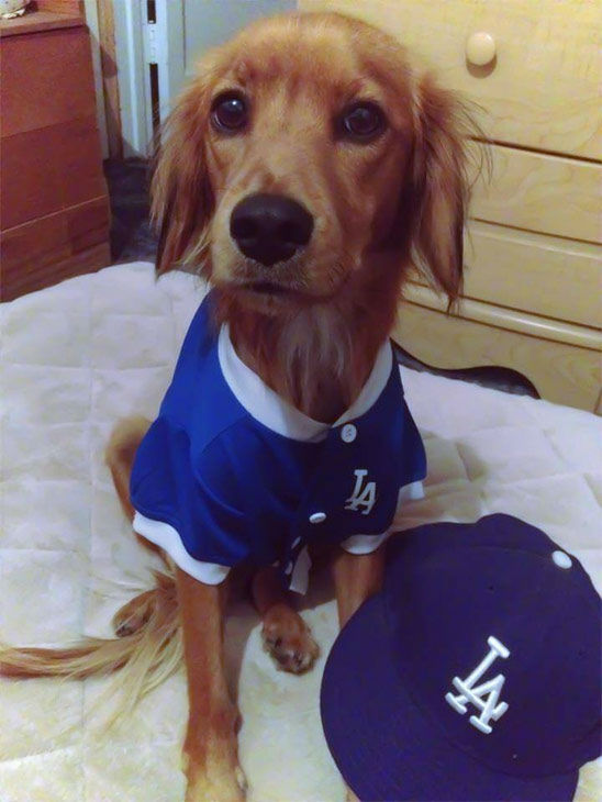 "<div class=""meta ""><span class=""caption-text "">Show us your Dodger love! Post your fan photos on our ABC7 Facebook page, and you might be featured on-air. You can also send us your photos on Twitter or Instagram with #abc7dodgers. LET'S GO DODGERS! (KABC Photo / Monique Valenzuela)</span></div>"