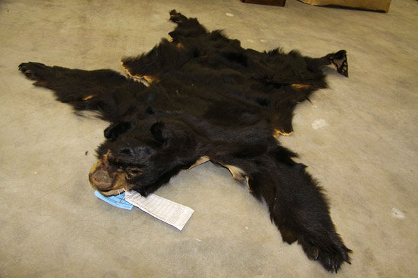 James I. Colburn, 66, of Leona Valley was arrested for allegedly selling a bear skin rug. The arrests are a result of Operation Cyberwild, a task force investigation that led to the arrests of 10 people in California, as well as two individuals in Nevada.