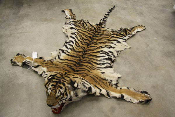 Victor Northrop, 48, of Henderson, Nevada was arrested for allegedly selling a rug made out of an endangered tiger for $10,000. The arrests are a result of Operation Cyberwild, a task force investigation that led to the arrests of 10 people in California,