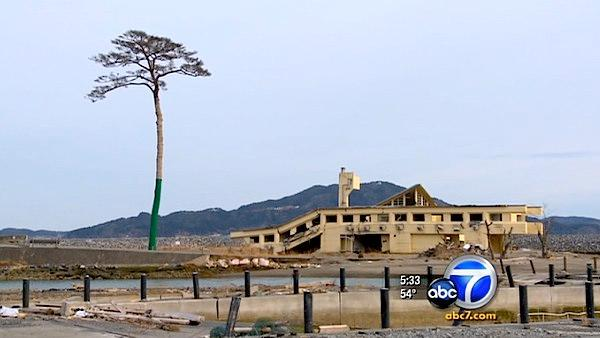 'Tree of Hope' stands after Japan quake, tsunami