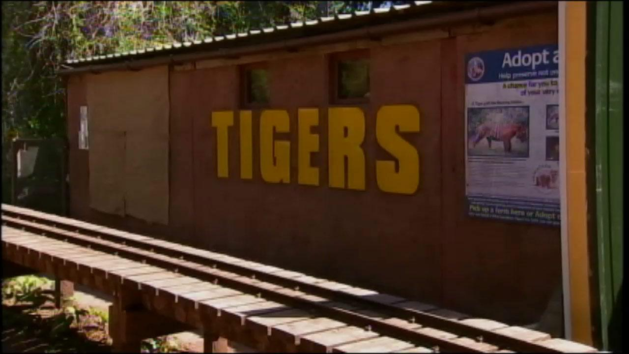 A zookeeper was mauled to death by a Sumatran tiger at South Lakes Wild Animal Park in Cumbria, England, British police said Saturday, May 25, 2013.